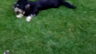 the dog ready for play - Video