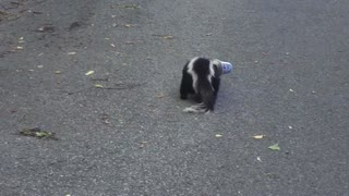 Skunk is Rescued from a Stinky Situation - Video