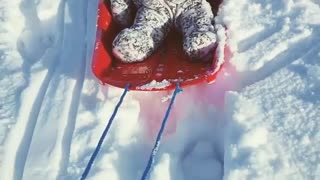 Collab copyright protection - baby blue red sled faceplant snow  - Video