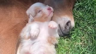 Puppy And Baby Horse Are Best Friends