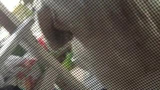 Labrador doesn't understand to grab leash to open screen door - Video