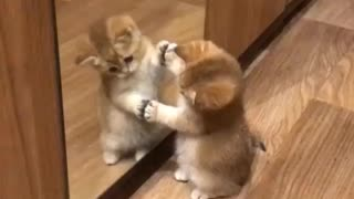 Double Trouble meow