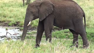 Mother Elephant ·Goes Near Family On Forest Reunion