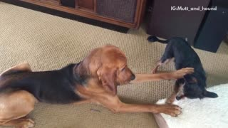 Dog messing around with cat  - Video