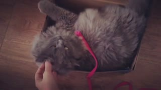 Caty Stuck in A Box In Slow Motion