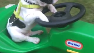 Black and white dog on green tractor - Video