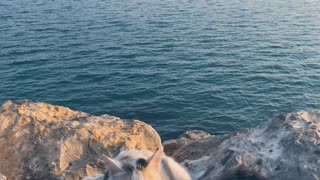 A cat goes to the sea to change the atmosphere