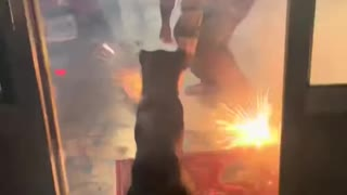 Dog Brings Sparkler Inside