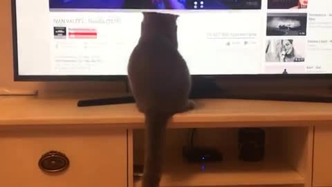 Funny cat chases mouse pointer