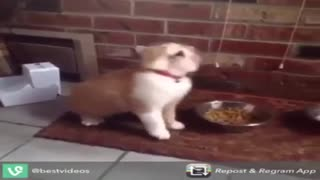 funy cats-cat - Video