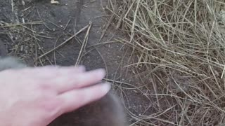 Hanging with Baby Beavers - Video
