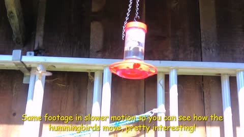 See how a hummingbird moves in slow motion!