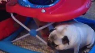 Baby has priceless conversation with his pug - Video