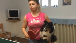 Dog anxious to play ping-pong