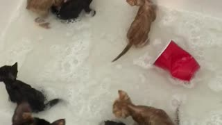A bubble bath full of kittens  - Video