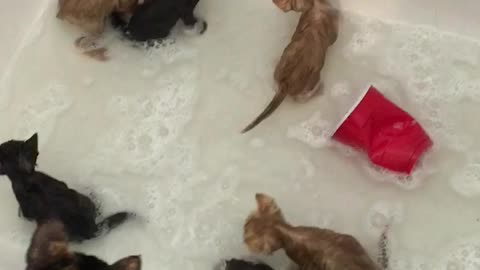 A bubble bath full of kittens