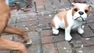 Boxer desperately attempts to befriend ceramic dog - Video