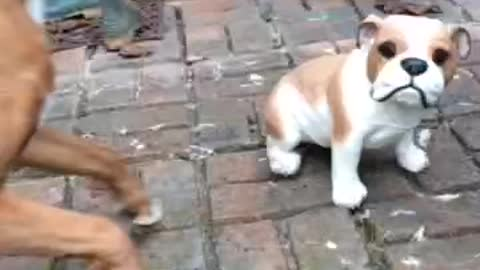 Boxer desperately attempts to befriend ceramic dog