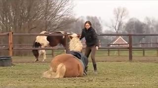 (VIDEO) Stunning Haflinger – This will make you laugh! - Video