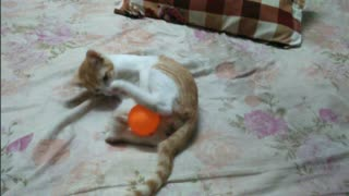 Funny cat play with a ball