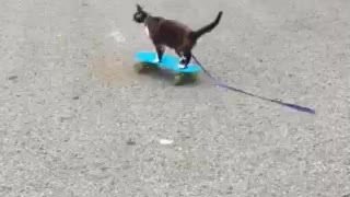 Skateboarding cat!!!! - Video