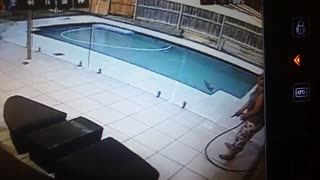 Startled cat jumps into pool - Video
