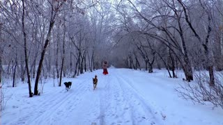 Happy Dogs play in snow