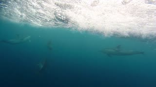 Dolphins Swimming Underwater & Alongside Boats With Relaxing Music