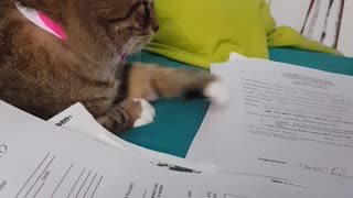 Don't Touch My Papers