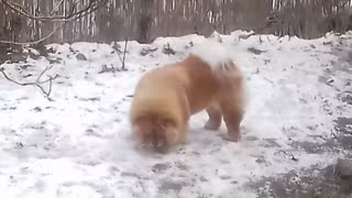 My beautfly home Dogs - Video