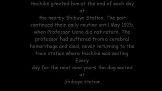 81-Year-Old Rare Photo of the Famous Hachiko Found - Video