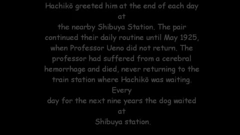 81-Year-Old Rare Photo of the Famous Hachiko Found