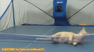 FUNNY VIDEOS Funny Cats Funny Cat Videos Funny Animals Cats Funny Videos 2014 - Video