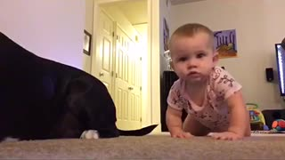 Pitbull crawls with her baby - Video