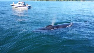 Whale Encounter at Chambers Bay - Video