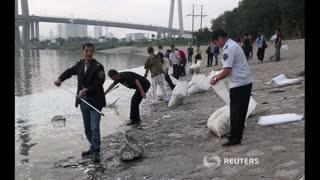 Thousands of dead fish wash up near Tianjin blast site - Video