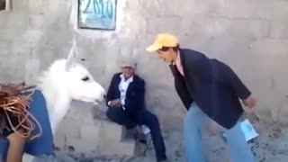 Man talks to donkey -Funny Short Clip - Video