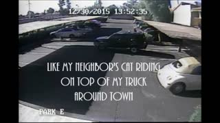 Adventurous cat wants to ride around town - Video