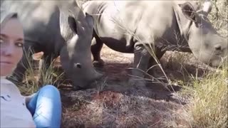 Orphaned Rhino Kisses Her New Mother - Video