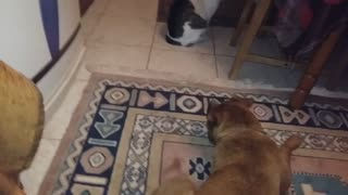 My dog Fatsa want play with my cat...