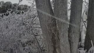 Winter Wonderland at Point Pelee Provincial Park  - Video