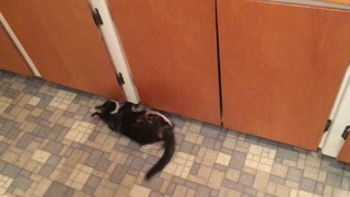Crazy kitten goes bonkers attacking nothing - Video