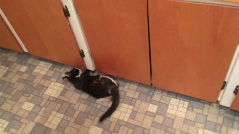 Crazy kitten goes bonkers attacking nothing