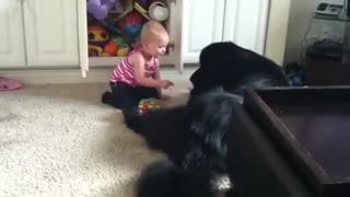 Toddler shows her huge dog her toy stash