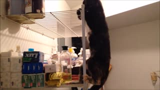 Parkour kitty - Video