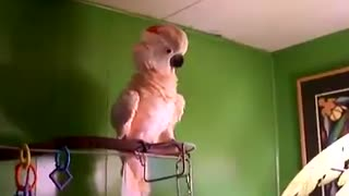 this is something special, crazy parrot - Video
