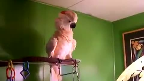 this is something special, crazy parrot