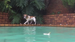 Jack Russell Goes Catfishing - Video