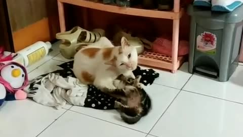 Daddy Cat Can't Keep Up With The Playful Behavior Of Its Son