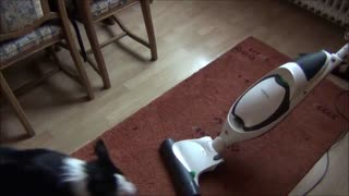 Border Collie versus vacuum cleaner  - Video